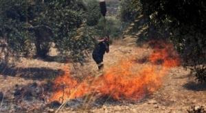 احتراق 9000 دونماً زراعياً في الأغوار بسبب تدريبات الاحتلال